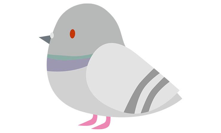鳩よけネットの選び方と設置のポイント